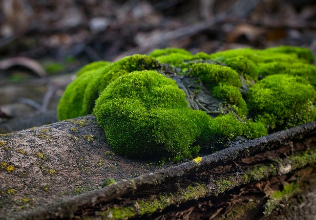 Green Moss on Log Graphic